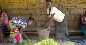 A young boy and girl gather rice in Sierra Leone